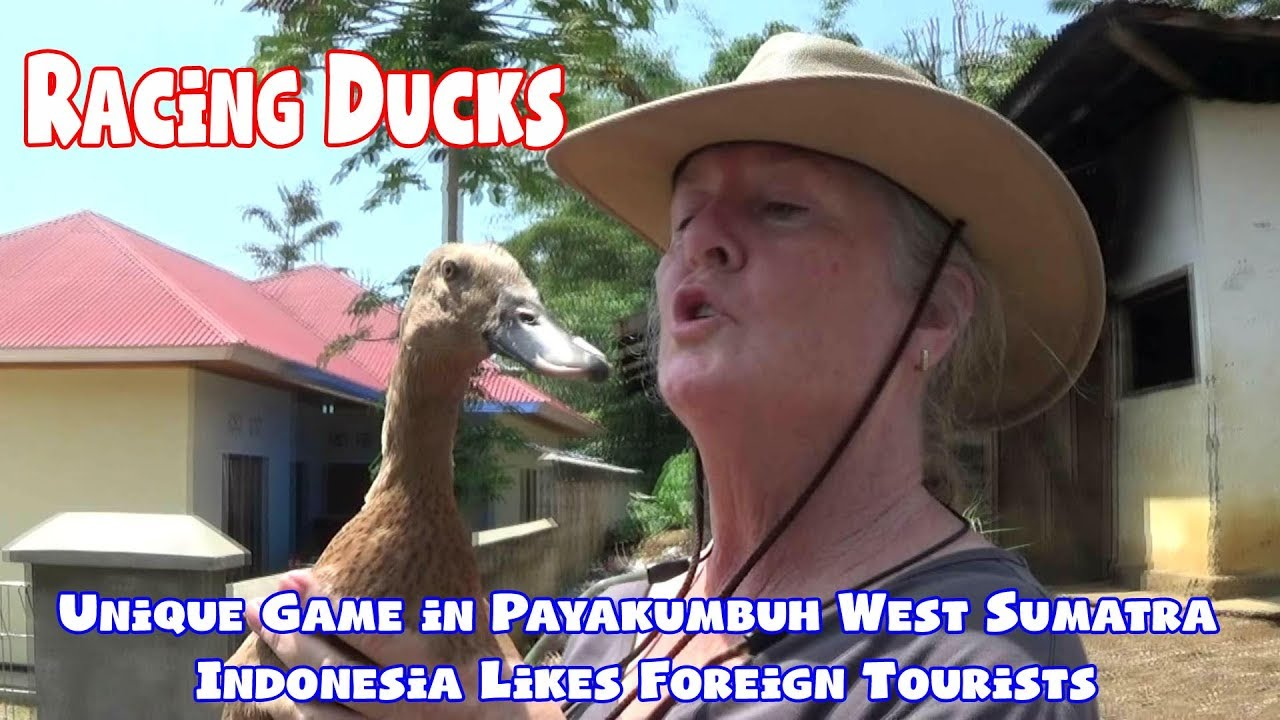 Racing Ducks, Unique Game in Payakumbuh West Sumatra Indonesia Likes Foreign Tourists